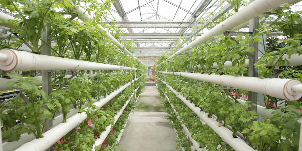 Autogrow-announces-its-support-of-a-global-indoor-agriculture-hub--in-Kennett-Township-Pennsylvania