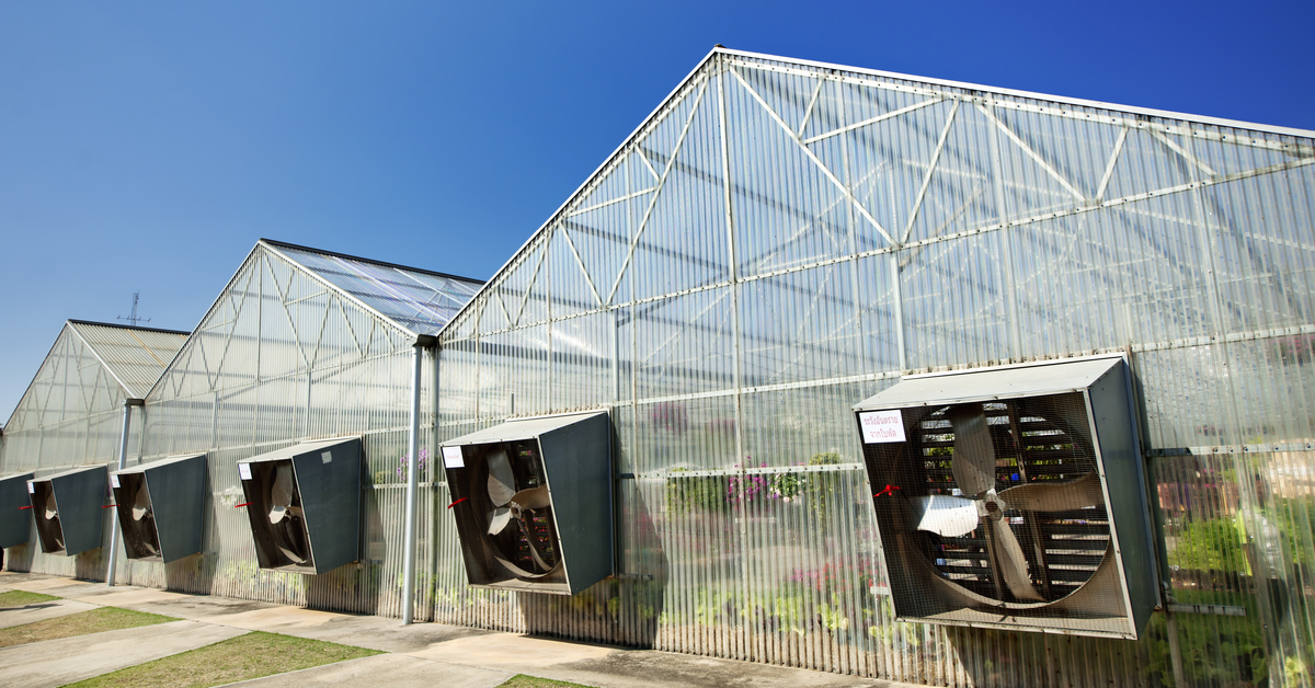fans on side of commercial greenhouses